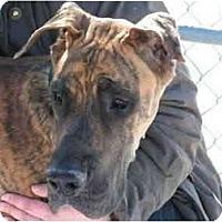 Adopt A Pet :: Zeke - Rigaud, QC