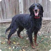 Adopt A Pet :: Stormy - DeKalb, IL