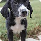 Adopt A Pet :: JUDSON