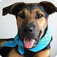 Adopt A Pet :: Gater - Monteregie, QC