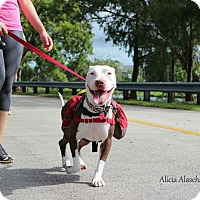 Adopt A Pet :: Luna - Miami, FL