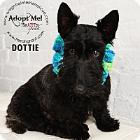 Adopt A Pet :: Dottie-pending adoption - Omaha, NE
