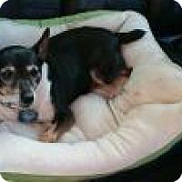 Adopt A Pet :: Dutchess - Berkeley Hts, NJ