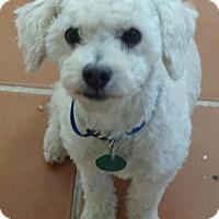Adopt A Pet :: Rice - San Diego, CA