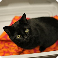 Adopt A Pet :: Pickles - Mebane, NC