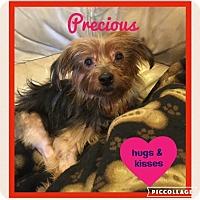 Adopt A Pet :: Precious - Beechgrove, TN
