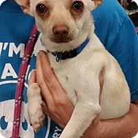 Adopt A Pet :: Wyman - Gainesville, FL