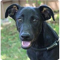 Adopt A Pet :: RACIN - Red Bluff, CA