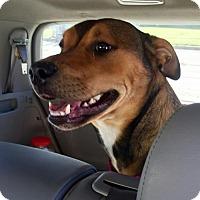 Adopt A Pet :: Zoey - Seattle, WA