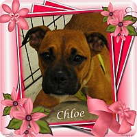 Adopt A Pet :: Chloe - Crowley, LA