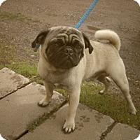 Adopt A Pet :: TANK - Medford, WI