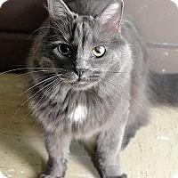 Adopt A Pet :: Patti(Ashlynn) - Fort Leavenworth, KS