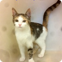Adopt A Pet :: Rosie - Tiffin, OH