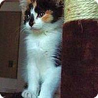 Adopt A Pet :: Toyota - Hudson, NY