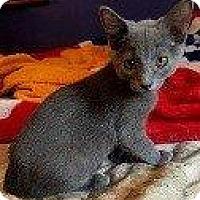 Adopt A Pet :: MAGNOLIA - Hampton, VA