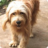 Adopt A Pet :: Buick - adoption pending - Norwalk, CT