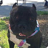 Adopt A Pet :: Mugsy - Pleasanton, CA