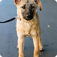 Adopt A Pet :: Martinelli - Palo Alto, CA