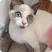 Adopt A Pet :: Skye - Morganville, NJ