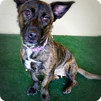 Adopt A Pet :: Connie Conolly - Casa Grande, AZ