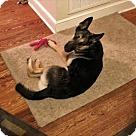 Adopt A Pet :: Thor 5068