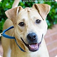 Adopt A Pet :: Joss - Atlanta, GA
