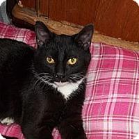 Adopt A Pet :: Thor - Acme, PA