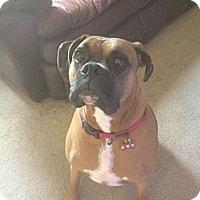 Adopt A Pet :: Leon - Phoenix, AZ