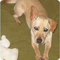Adopt A Pet :: Cokey - FOSTER NEEDED - Seattle, WA