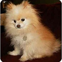 Adopt A Pet :: Buddy - Mooy, AL