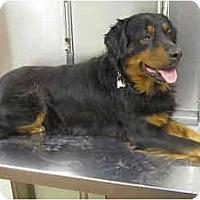 Adopt A Pet :: BJ - DeKalb, IL