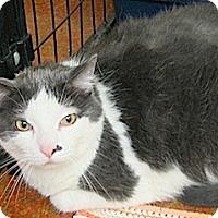 Adopt A Pet :: Kenzie - Euclid, OH