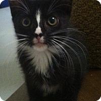 Adopt A Pet :: Queenie - Fredericksburg, VA