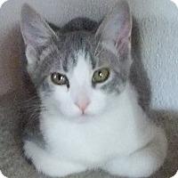 Adopt A Pet :: MissLee - North Highlands, CA