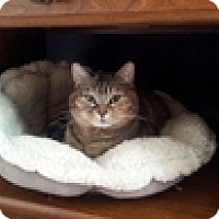 Adopt A Pet :: Lisa - Vancouver, BC