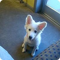 Adopt A Pet :: snowball - Henderson, KY