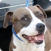 Adopt A Pet :: Kaylee - Sacramento, CA