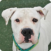 Adopt A Pet :: SATURN - A877031 is in danger at The Animal Founda - Beverly Hills, CA