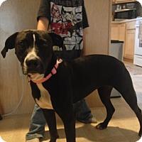 Adopt A Pet :: Peaches - Daleville, AL