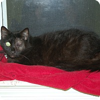 Adopt A Pet :: Yoshi - Great Mills, MD