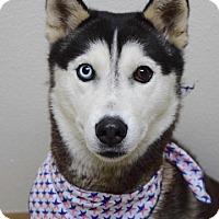 Adopt A Pet :: Meeko - Dublin, CA