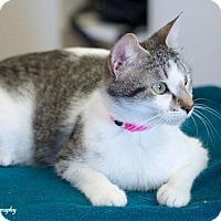 Adopt A Pet :: Ariel - Homewood, AL