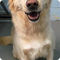 Adopt A Pet :: Mags - BIRMINGHAM, AL