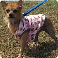 Adopt A Pet :: Ellie - Windsor, VA