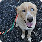 Adopt A Pet :: Dakotah