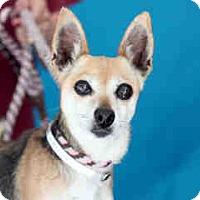 Adopt A Pet :: Money Penny - San Marcos, CA