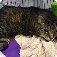 Adopt A Pet :: Hercules - Paducah, KY