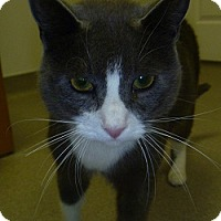 Adopt A Pet :: Moe - Hamburg, NY