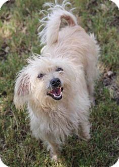 Terrier (Unknown Type, Medium) Mix Dog for adoption in Helotes, Texas - Sara