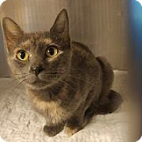 Calico Cat for adoption in Middletown, New York - Fiona